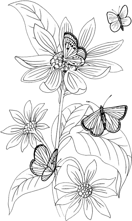 Butterfly Coloring Pages 17 | Purple Kitty