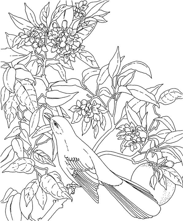Florida state bird coloring pages ~ Florida Mockingbird Coloring Page | Purple Kitty