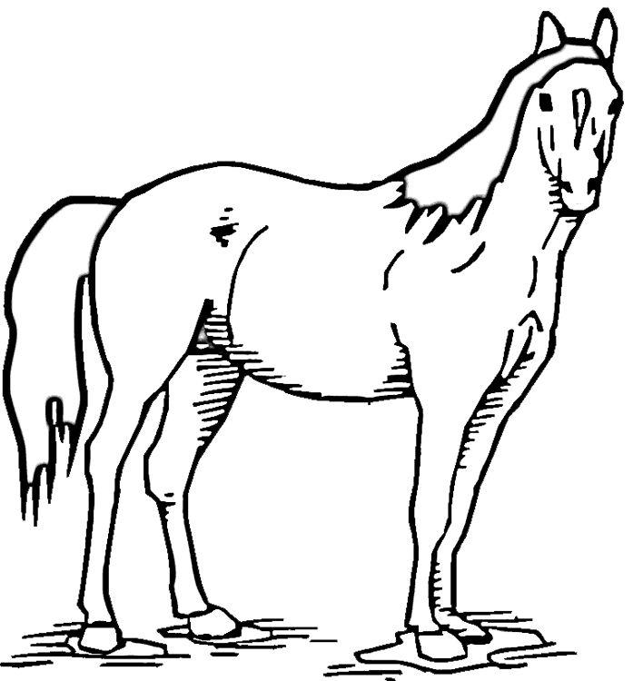 Pinto Horse Coloring Pages: Pinto Horse Coloring Coloring Pages