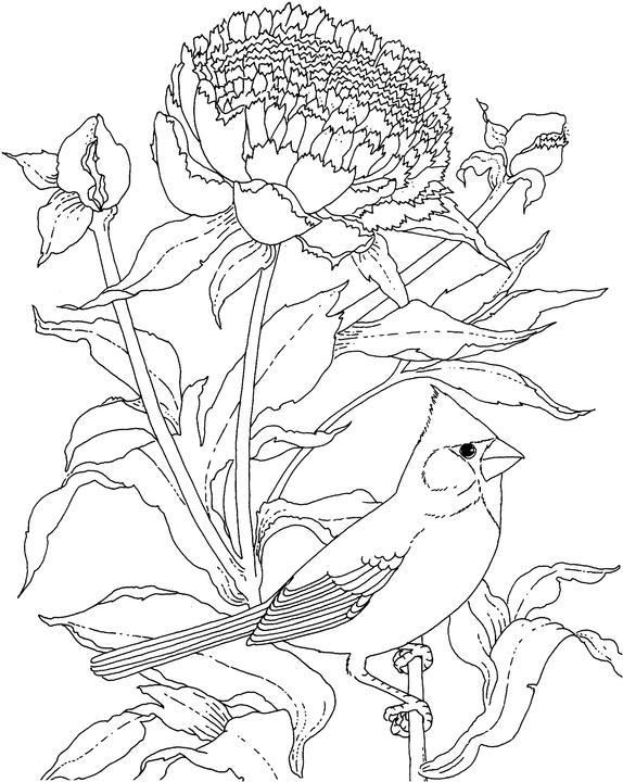 indiana bird coloring pages - photo#7
