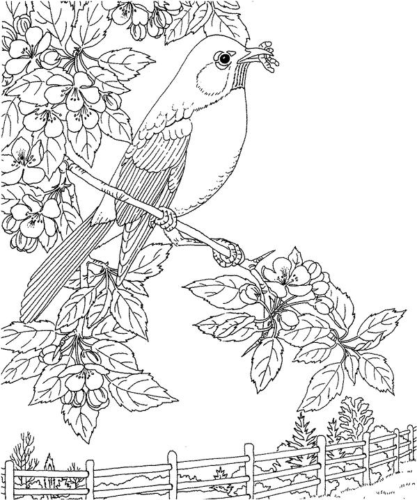 Michigan Robin Coloring Page