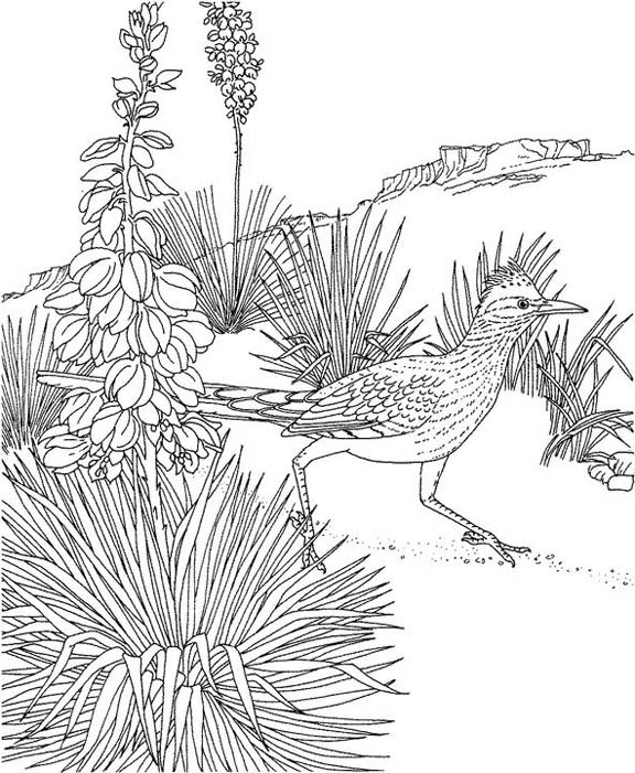 New Mexico Roadrunner Coloring Page | Purple Kitty