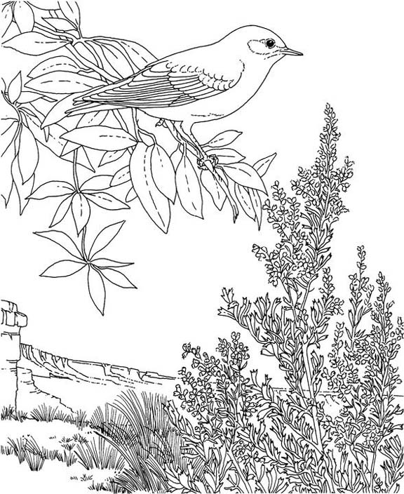 nevada state coloring pages - photo#20