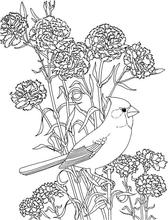 cardinal coloring pages preschool free - photo#48